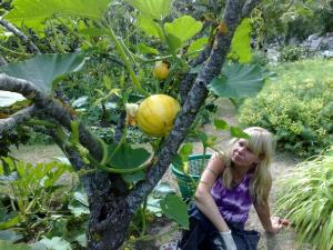 !cid_200808101444 pumpa i äppelträd