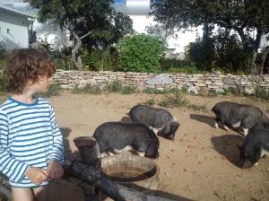 alvin och grisarna