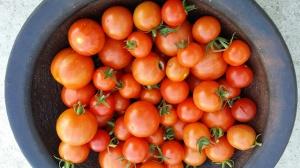 tomater sept 2014