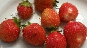 jordgubbar i oktober