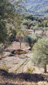 helgas olivlund